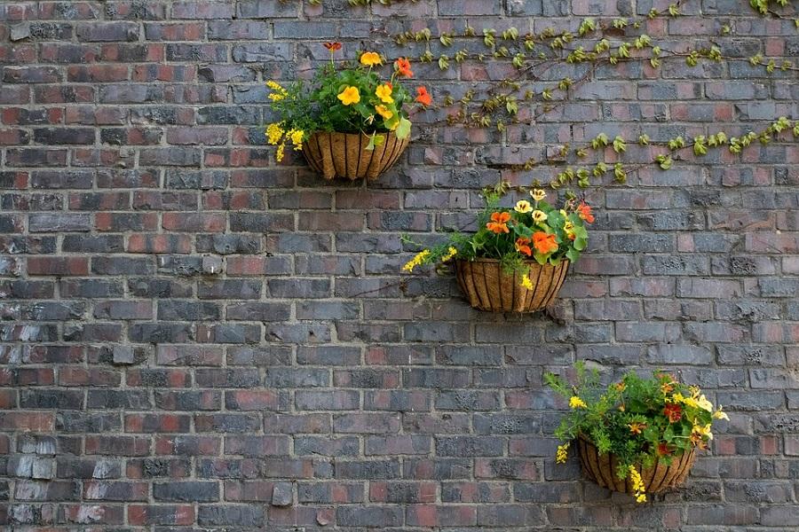 Comment décorer votre mur avec des plantes _ voici 5 idées brillantes